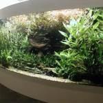 Гнутое стекло для аквариумов — Мир стекла и зеркал Чебоксары